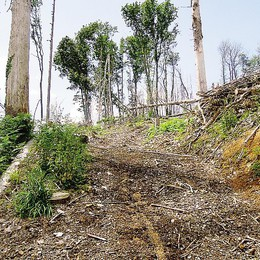 Erba,  bosco malato all'Alpe Bova  Alberi abbattuti, ma mai rimossi