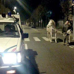 Tre cavalli in fuga  Rodeo a Vighizzolo