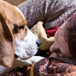Gli animali riconoscono le nostre emozioni