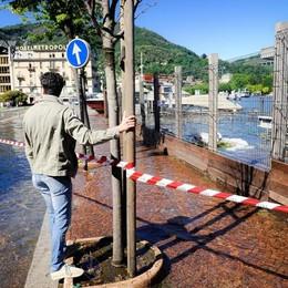 Como lago esondato in piazza Cavour, covata persa al nido dei cigni del cantiere paratie