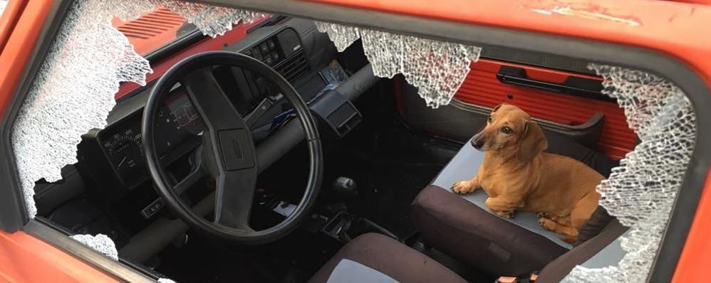 Ruba un'auto portandosi il cane  Lui è arrestato, Fido dai parenti