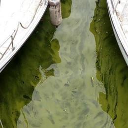 L'acqua del lago si colora di verde  Ma è solo la fioritura delle alghe