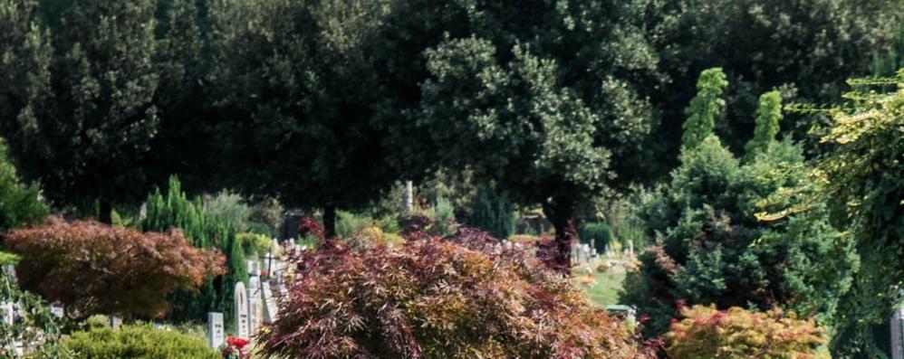 Cimiteri, scandalo erbacce  Landriscina: «Colpa mia»