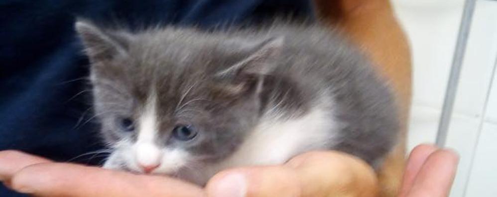 Salvi due gattini lanciati da un'auto  Una denuncia a Mariano