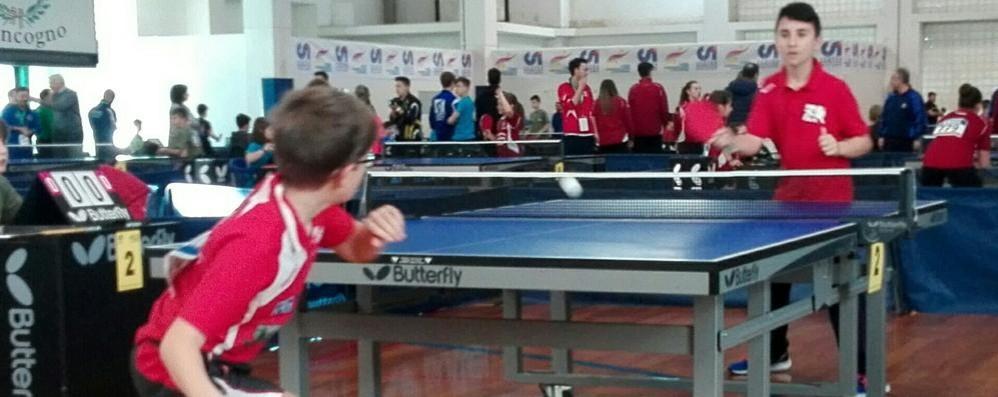Tennis tavolo, campionati al via con tante comasche