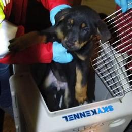 Undici cuccioli nel bagagliaio scoperti al valico di Brogeda
