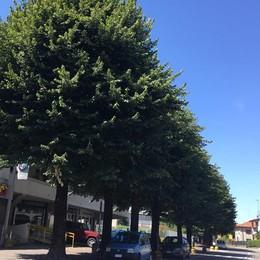 Cantù è green: tremila alberi  Lo dice il censimento sul verde