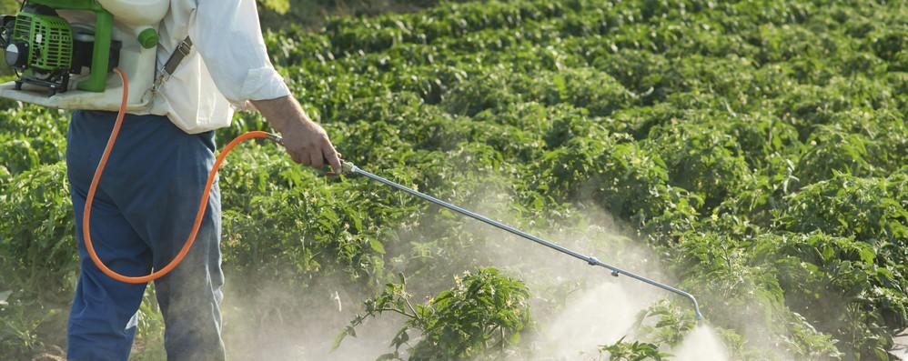 Pesticidi: Bruxelles approva il divieto al thiacloprid