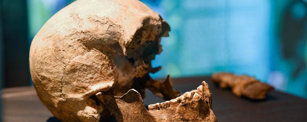 Il misterioso cranio di Roma  «È di Plinio il Vecchio»