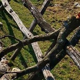 Vandali all'alpeggio  Distrutti gli alberi