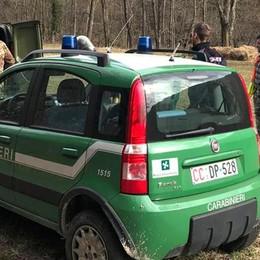 Caccia al lupo tra Lipomo e Drezzo Mobilitati i carabinieri forestali