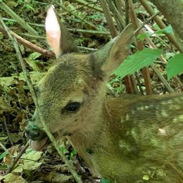 Magreglio, le guardie ecologiche  «Basta cani liberi nel bosco»