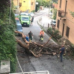Dizzasco, albero trancia  cavo dell'energia  Black out e provinciale a senso alternato