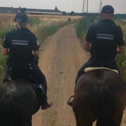 Continua la lotta alla droga nei boschi  Bregnano, spacciatori inseguiti a cavallo